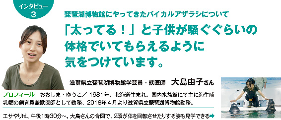 琵琶湖博物館にやってきたバイカルアザラシについて 「太ってる!」と子供が騒ぐぐらいの体格で いてもらえるように気をつけています。 滋賀県立琵琶湖博物館学芸員・獣医師 大島由子さん
